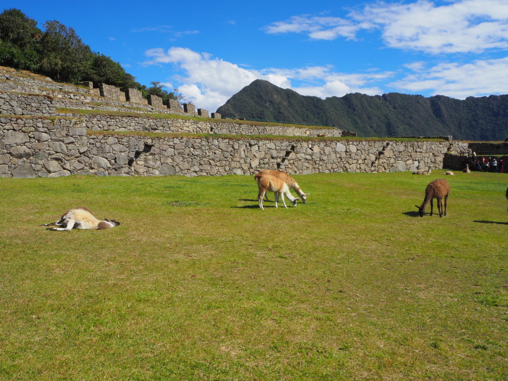 Machu Picchu's current inhabitants
